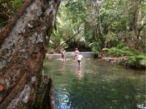 Mason's Creek, Cape Tribulation (photo by Mary C. Parks)