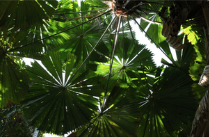 The dense canopy of the daintree (photo by Mary C. Parks)