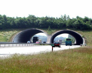 A wildlife crossing in the Netherlands (image: Bogdan Giuşcă, CC BY-SA 3.0)