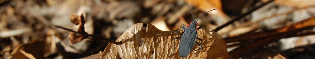 Bugs In Our Backyard