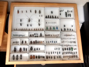 An insect display case. (photo: David R. Angelini, CC BY-SA 4.0)