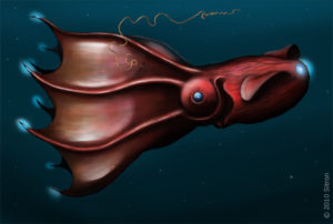 An artist's drawing of bioluminescence in the vampire squid (image by Citron, CC BY-SA 3.0)